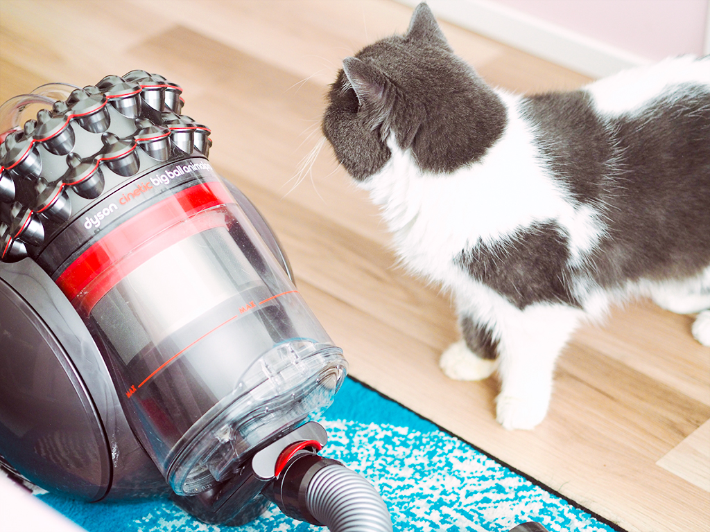 dyson cinetic animal big ball pro