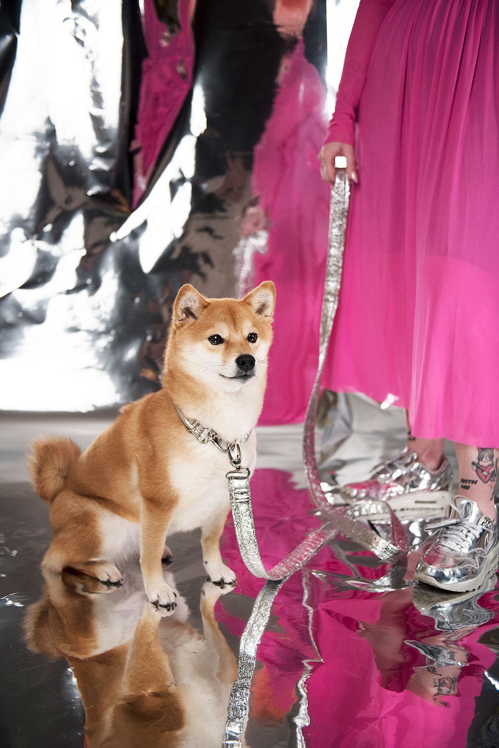 chien-chien shiba inu